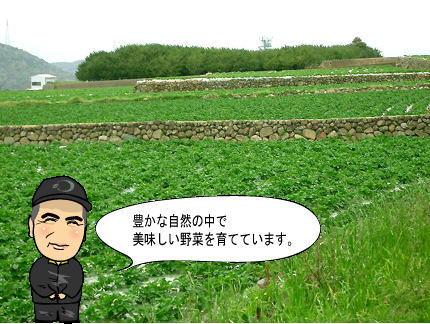 豊かな自然の中で美味しい野菜を育てています